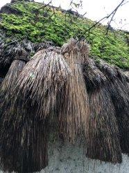 Ľudový dom so slamenou strechou